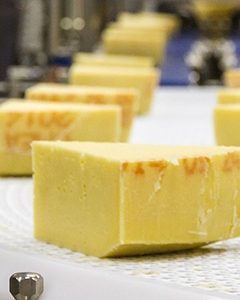 Cheese and Dairy Processing